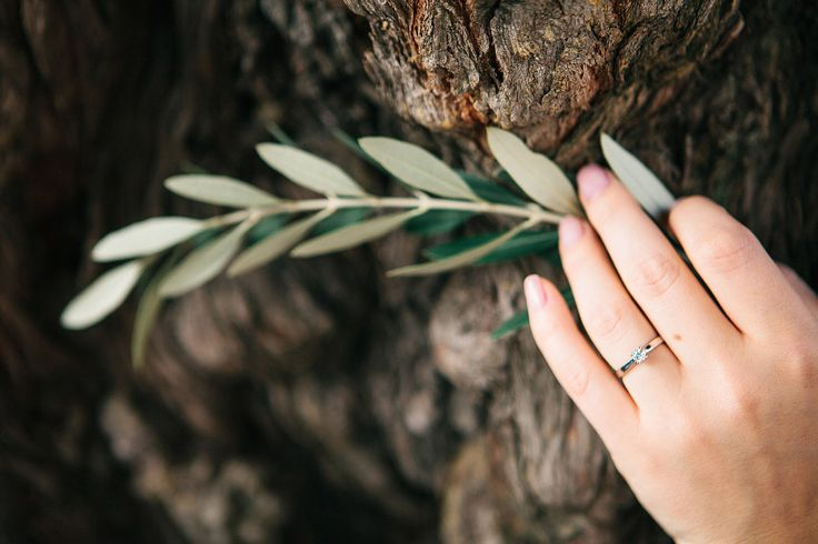 Olives & rings