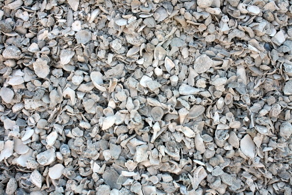 crushed shell driveway home pinterest shells and