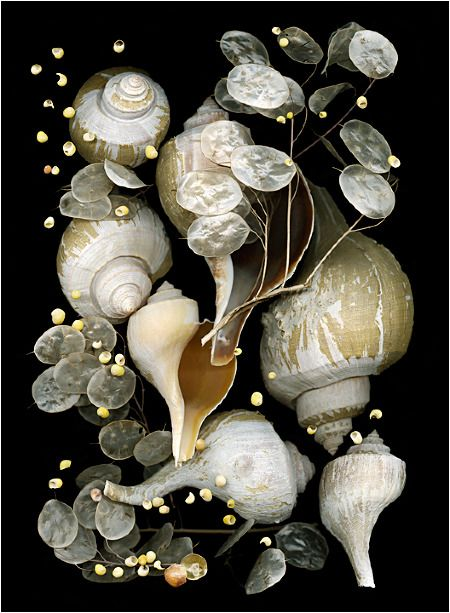 Shoreline Treasures 1 - Scanner Photography By Ellen Hoverkamp Photography By Ellen Hoverkamp Yep.but your shells on your scanner, add a dark cloth over them and wait for the image to appear.