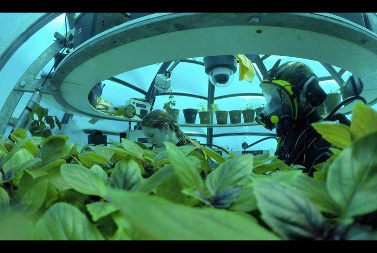Algen sind zurzeit in aller Munde! Das Superfood ist unter anderem ein Trend im 2017! Doch nicht nur Algen, sondern auch die maritime Landwirtschaft und Aquaponik sind Themen dieses Jahres!