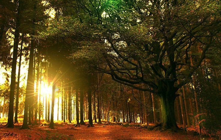 Broceliande, un viaje al bosque mítico del Mago Merlín/