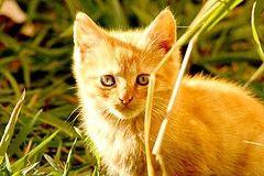 Homemade Cat Food Recipes, Healthy Cat Food Recipes - MissHomemade.com