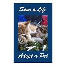 North East Humane Society website link on http://www.bestcatanddognutrition.com/roger-biduk/canadian-animal-rescues-shelters/ Roger Biduk