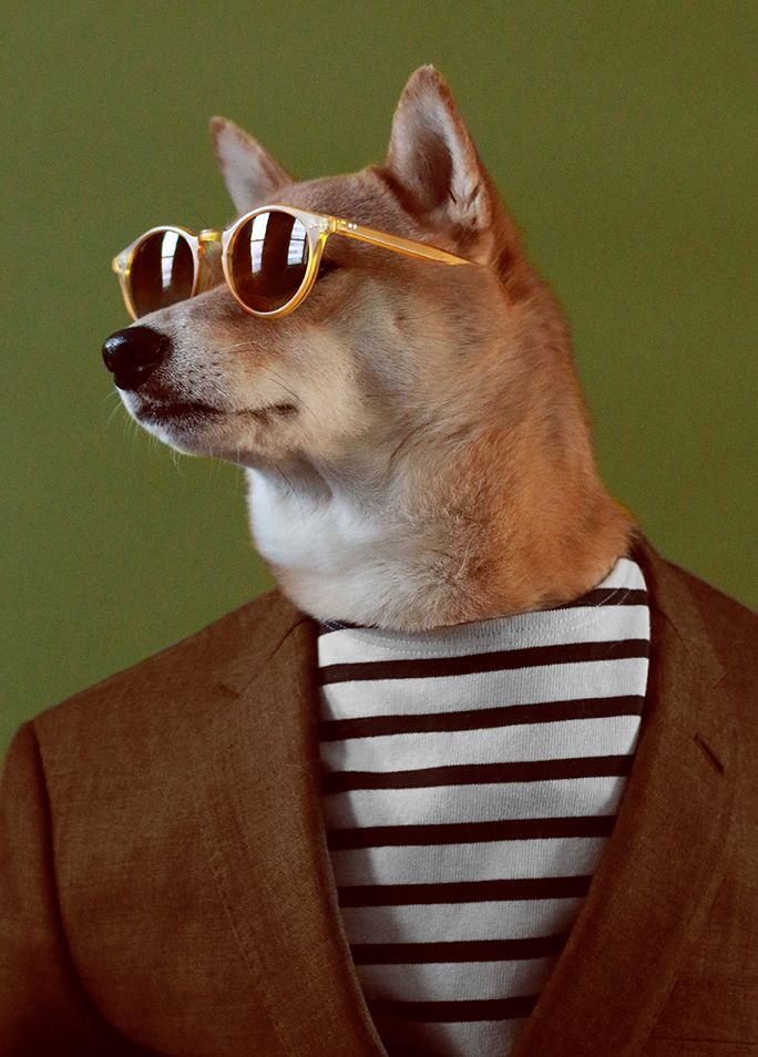 Menswear Dog sits for an interview and photo shoot with Harper's Bazaar  Head…
