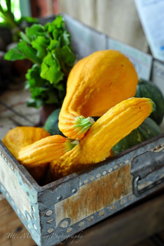 Yellow squash...one of my favorites!