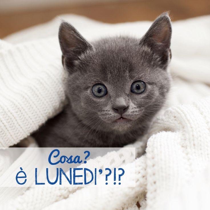 Anche questo dolce gattino non vuole saperne del lunedì!