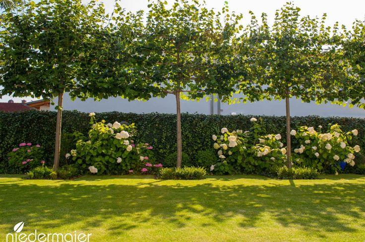 25 b sta id erna om schnellwachsende hecken p pinterest sichtschutz pflanzen zum gr nen. Black Bedroom Furniture Sets. Home Design Ideas