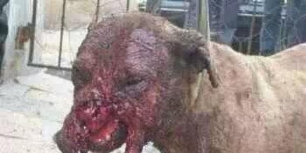 Dog Fighting Laws In Canada