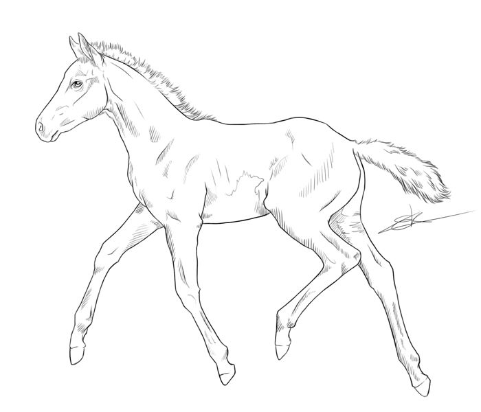 Realistic foal coloring pages