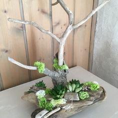 Arbre porte bijoux / présentoir à bijoux  /composition en bois flotté et plantes succulentes