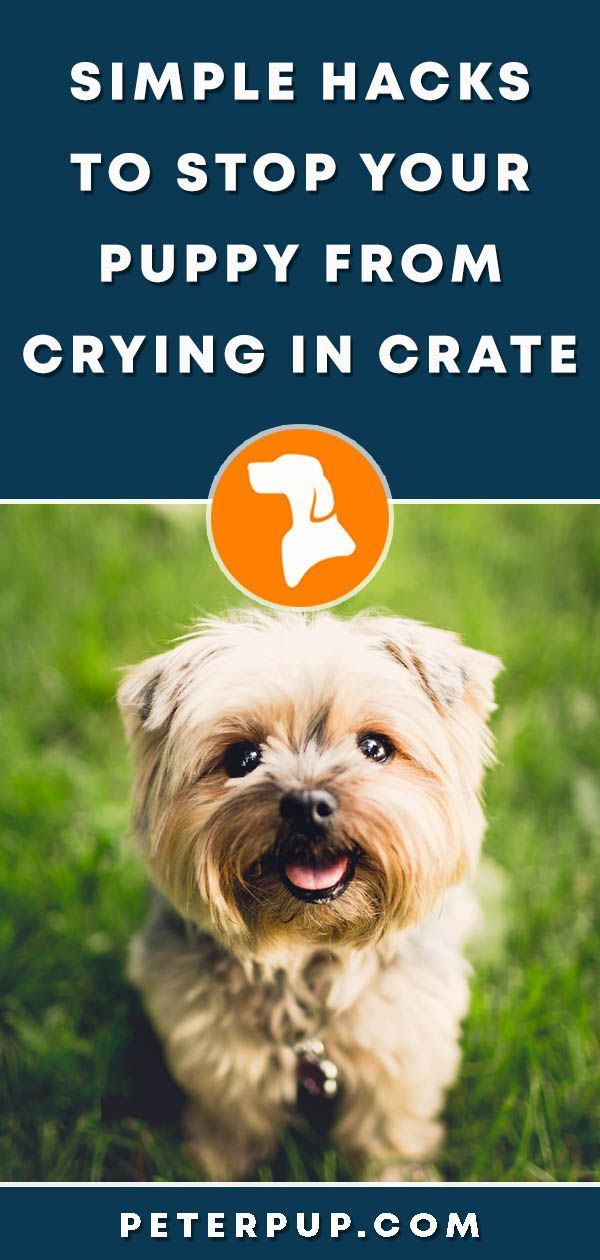 How To Stop Puppy Crying In Crate At Night Dog Training