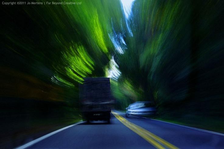 KL1369A - Mamaku Forest  - Copyright © 2012 Far Beyond Creative