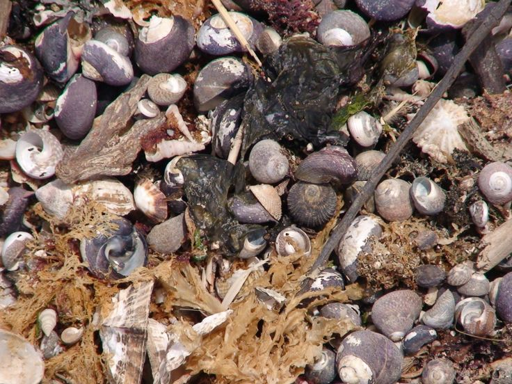 Shells on the beach - Gordon's Bay South Africa
