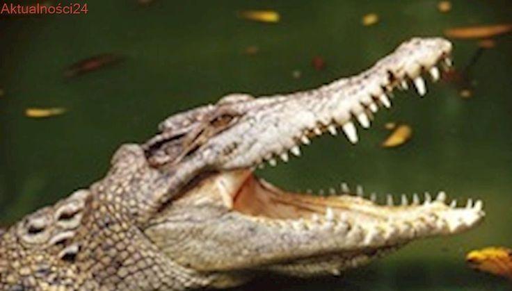 Teksas: Niebezpiecznie wzrasta poziom wody w rejonie ''Parku Aligatorów''