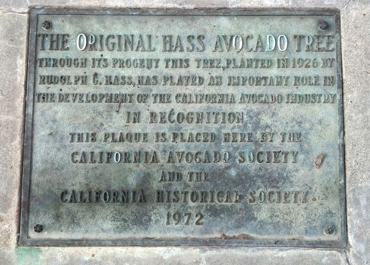 This plaque on West Road in La Habra Heights, California where the Hass  Mother tree once lived. Photo Courtesy of La Habra Heights Avocado Festival