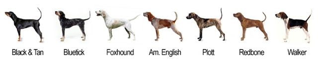 Cinnamon's Blog: Coon Hound Tales: What Kind of Dog Are You? A Beagle?
