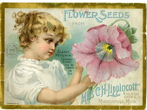 "A young girl admires a Crimson Queen Giant petunia on the 1898 Carrie Lippincott catalog cover. Carrie Lippincott, the self-proclaimed ""pioneer seedswoman"" and ""first woman in the flower seed industry"" established her mail-order flower seed business in Minneapolis in 1891. She cultivated women customers by sending out smaller 5 inch by 7 inch catalogs with colorful covers during her early years of business."