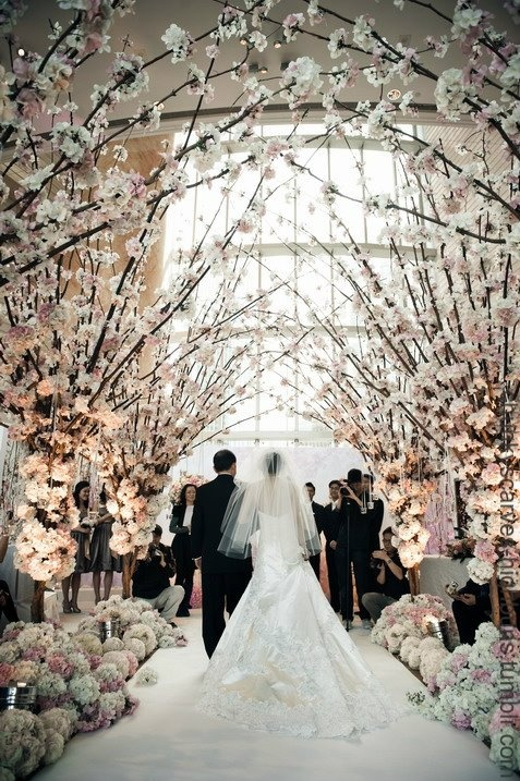 cherry blossoms... ah korean wedding...:)