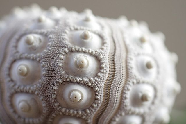 Urchin,   love the detail   ;)