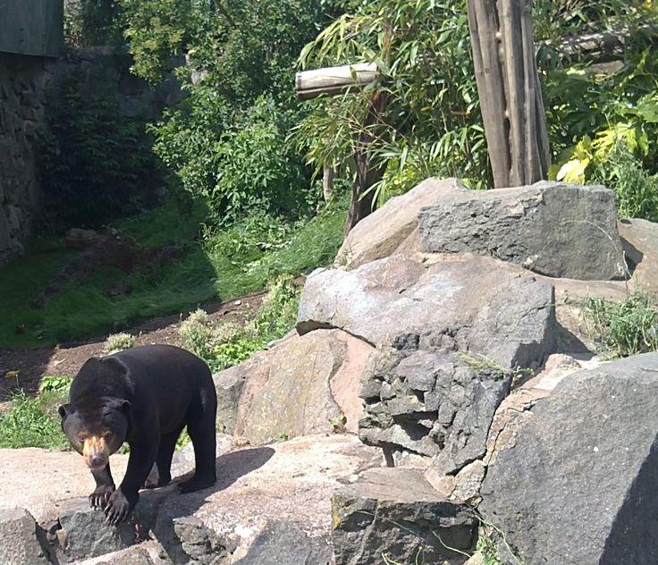 Hasil gambar untuk sun bear exhibit