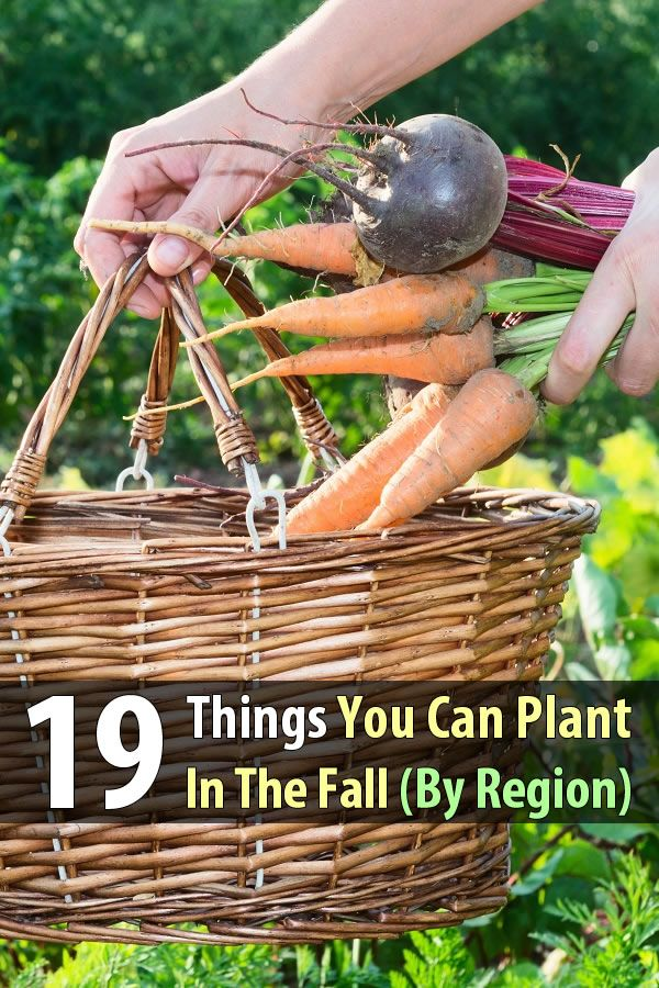 In early fall, the weather is still nice during the day and the nights aren't too cold yet, so why not plant another round of crops?
