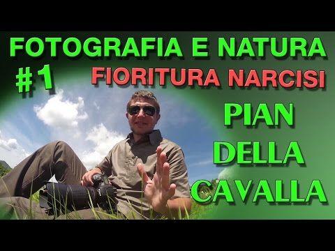 Fotografia e Natura #1: Fioritura narcisi a Pian della Cavalla - YouTube
