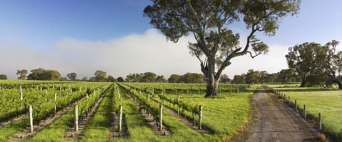 Whilst the world famous #Coonawarra Wine Region is indeed ... world famous, did you know that it has just turned 125 years old. Pay it a visit and say #HappyBirthday http://www.coonawarra.org/