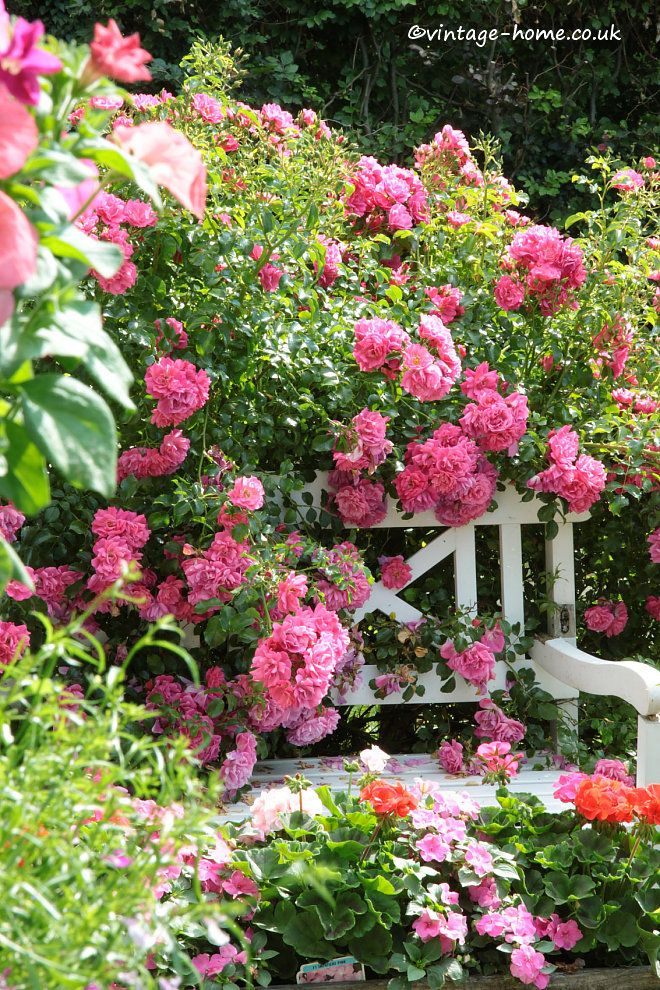 English country garden rambling rose covering a bench for Beautiful flowers to plant in your garden