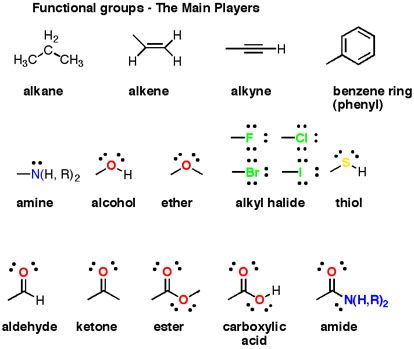 Functional Groups The main ones