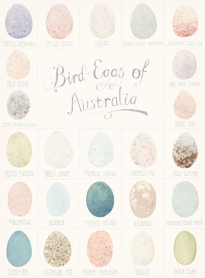 Bird eggs of Australia