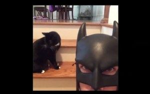 Batdad Rises… Again. new compilation of vine videos from the infamous Batdad.