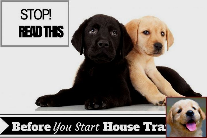 Dog Behavior Terms And Dog Training Courses In Canada Dog