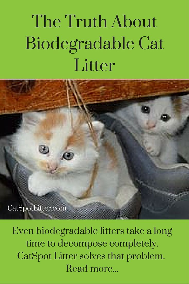how to get dust out of kitty litter