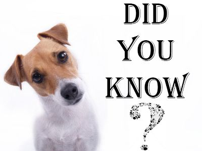 Click The Picture To Find Out The Most Important Things Your New Puppy Needs -> DOGSArena.com
