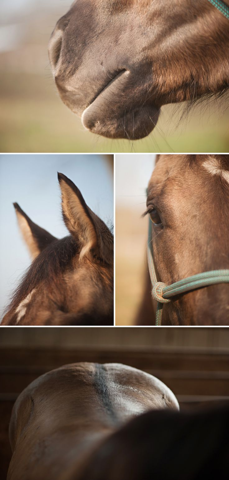 Horse  http://www.ilcavallophotography.com/blog/#  Equine & Wedding Photography in Cortland New York