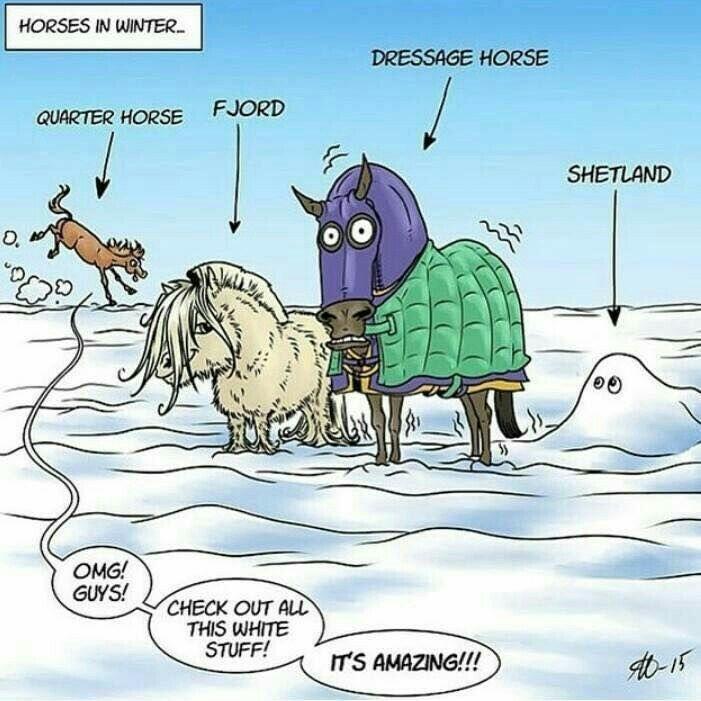 Funny Appendix Meme : The best funny horse memes ideas on pinterest
