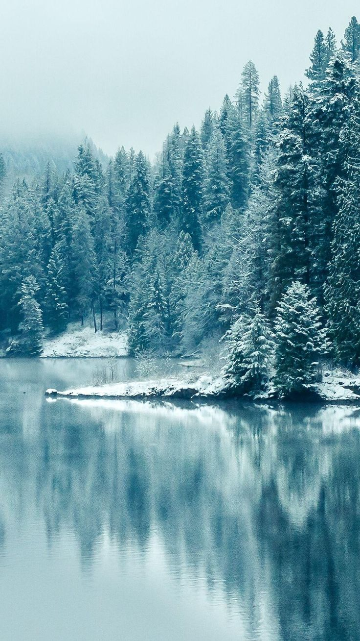 Turquoise pine forest lake snow iphone wallpapers - Free winter wallpaper for phone ...