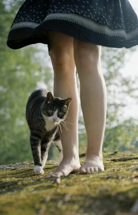 """There is something about the presence of a cat...that seems to take the bite out of being alone."" ~Louis J Camuti"