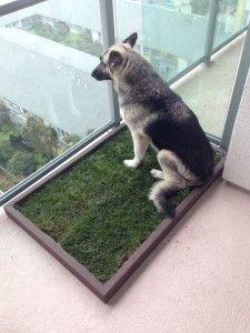 dogs bathroom grass. large dog litter box dogs bathroom grass y