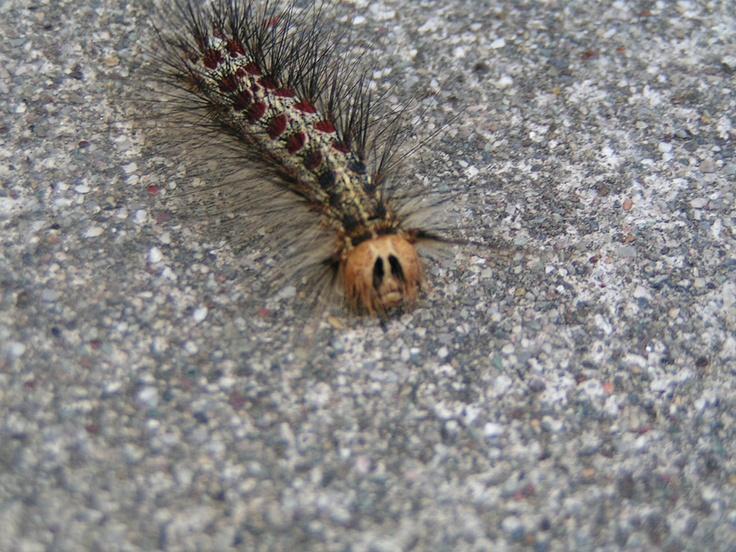 Caterpillar...soooo cute :)
