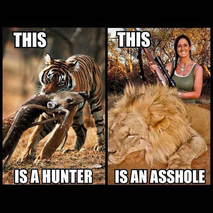 This is a hunter....