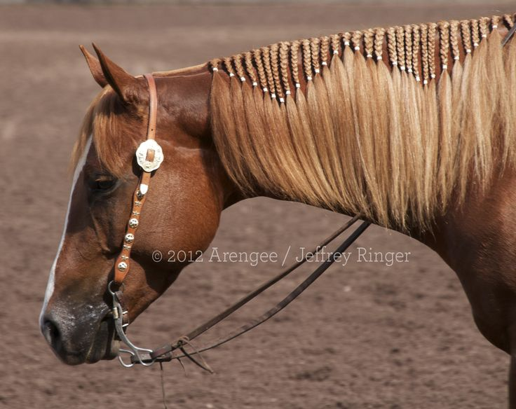 braided mane - This horse looks like my mare Cheyenne. Maybe one of these days I will do this to her mane.