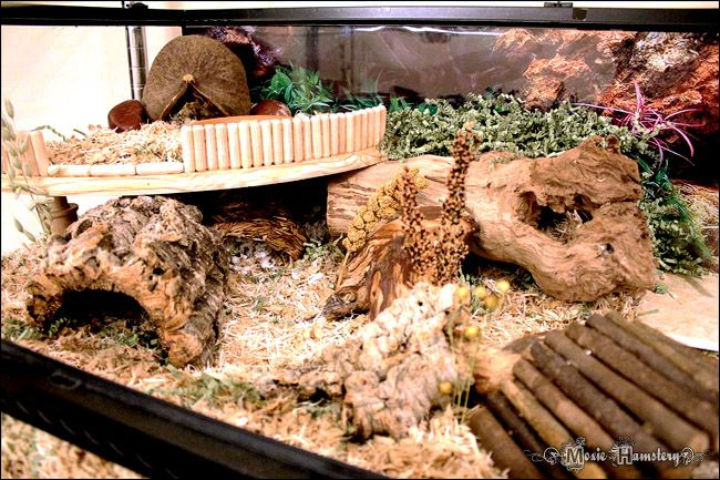 Repinned! (The cage nor hamsters belong to me/Andrea)   ----- Natural hamster home