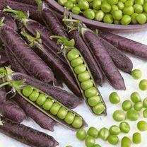 Pea Plants - Blauwschokker