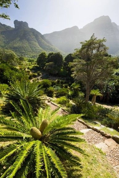 Kirstenbosch National Botanical Garden, Kapstadt, Südafrika