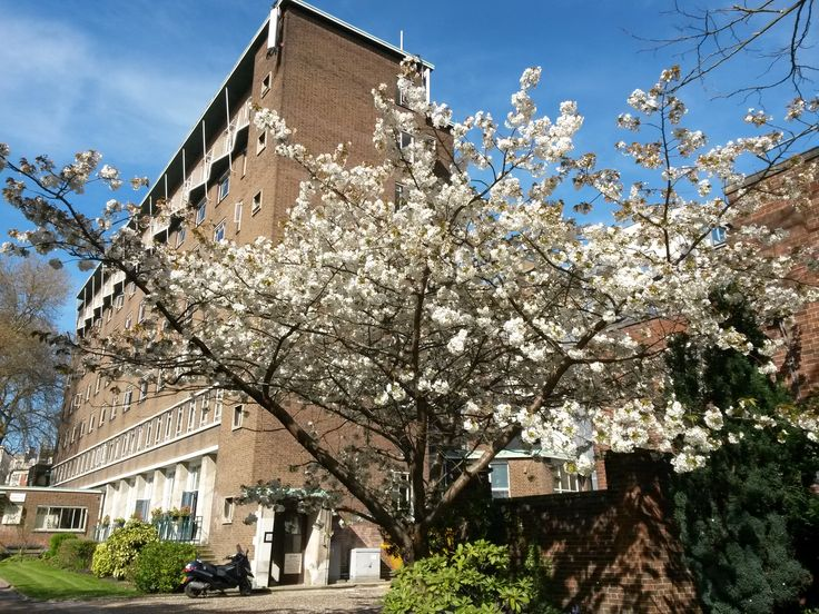 Spring blossom and Dawson Hall - by Marianne Baker