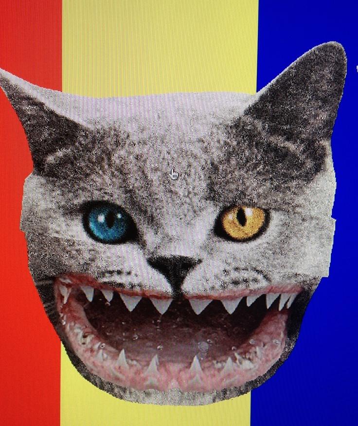catwang | Tumblr | Hipster, Feline, Animal faces |Catwang Wallpaper