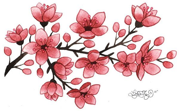 cherry blossom | Lori-Lee Thomas - Fine Art & Illustration Blog: Cherry Blossoms!