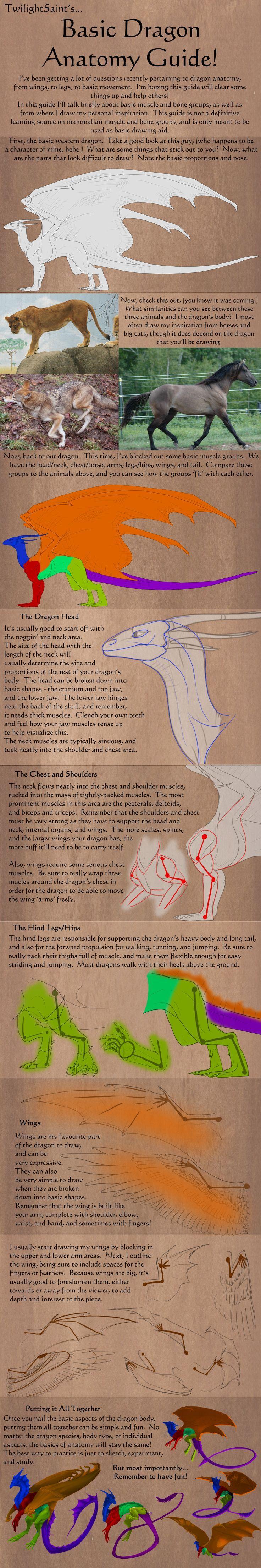 Basic dragon anatomy reference sheet