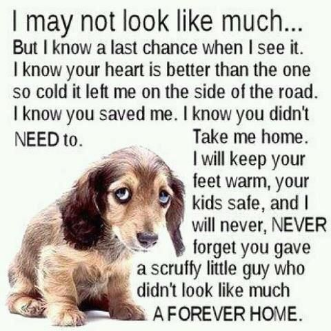 give a shelter dog a forever home